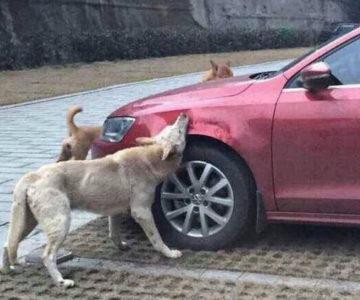Дивногорский городской суд удовлетворил иск автовладельца, припаркованную иномарку которого поцарапала собака